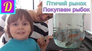 Птичий рынок. Покупаем рыбок в наш аквариум! | Aquarium fish
