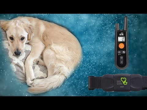 Dog Care Dog Training Collar Rechargeable Dog Shock Collar Review