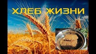 Хлеб жизни! Самый быстрый и полезный хлеб в мире!!