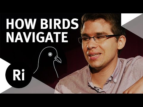 Can Blind Birds Navigate? - Monthly Mailbag #8