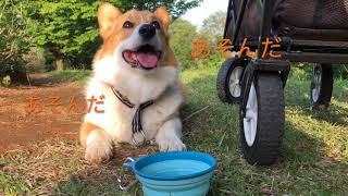 コーギー小太郎のわんぱくライフ02「ペット用ドライブボックス」