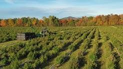 Future Farm Maine_October Harvest