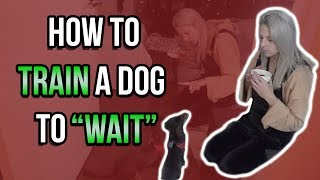 HOW TO TRAIN A DOG TO WAIT FOR FOOD
