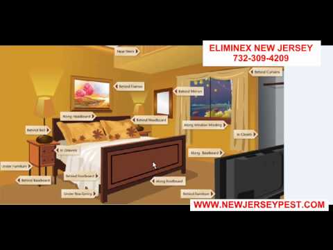 Where do bed bugs hide in your bedroom Linden NJ 732-640-5488 Bed Bug exterminators
