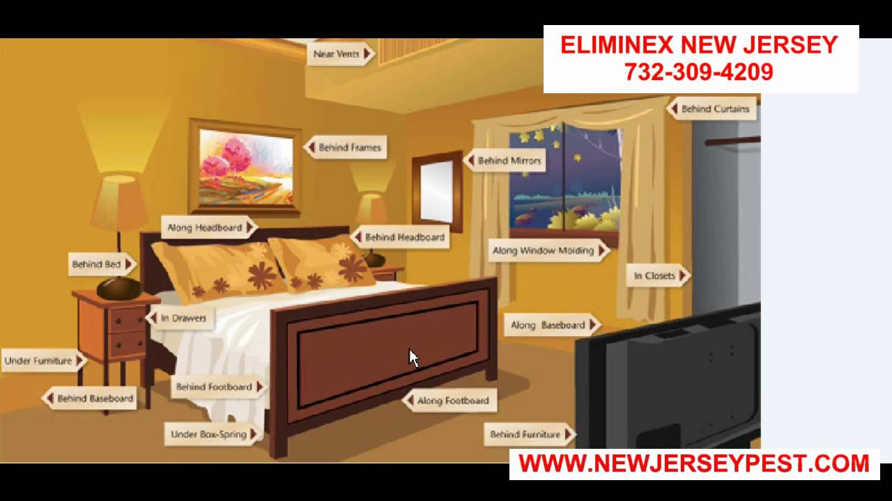Where Do Bed Bugs Hide In Your Bedroom Linden Nj 732 640 5488 Bed