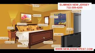 Where do bed bugs hide in your bedroom Linden NJ 732-640-5488 Bed Bug exterminators