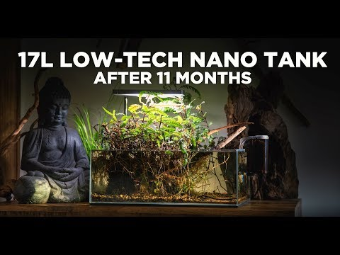 17l-low-tech-nano-tank---the-best-nature-aquarium-i've-ever-made