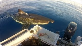 Future Shark Food | CLOSE Encounters With Great White