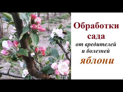Обработки яблони: сроки, вредители, болезни