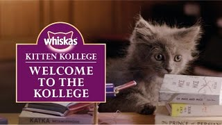 Ep.1 Kitten Kollege: Welcome to the Kollege
