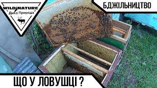 видео БДЖІЛЬНИЦТВО