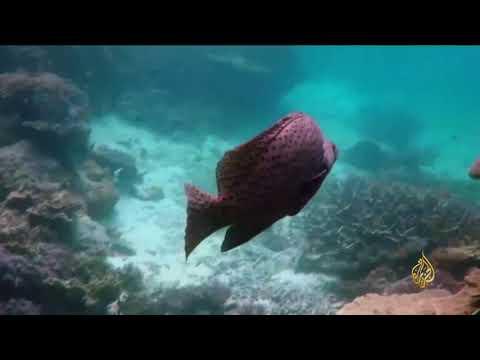هذا الصباح- أضخم تجمع للشعاب المرجانية في العالم  - نشر قبل 3 ساعة