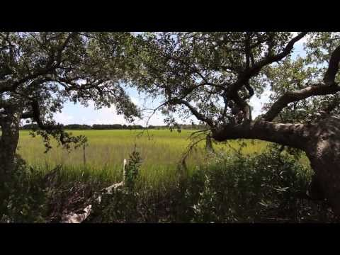 Episode 1: The Beautiful Lowcountry