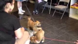 Long Island Puppy Preschool, Sublime K9 Dog Training