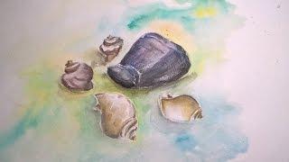 Урок рисования для начинающих, пишем акварелью и гуашью ракушки
