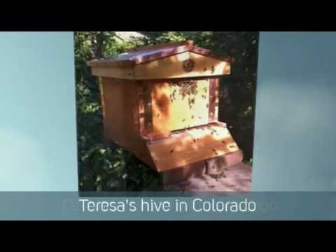 Eco Bee Box - our product in the world around us