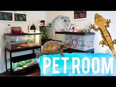 Pet Room Tour 2017 | Reptile Room Tour