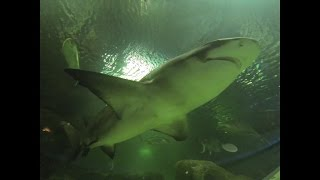 Shark Tunnel Blue Planet Aquarium Chester Gopro Black