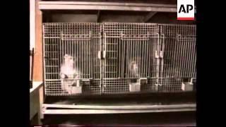 Georgia - Effects Of War On Monkey Zoo