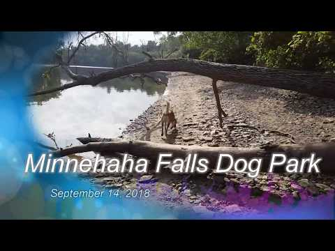 Minnehaha Falls Dog Park w Scout  9/14/2018