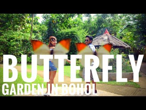 Habitat   Butterfly Garden In Bohol Philippines   G Vlogs #31   YouTube