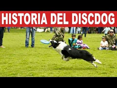 Discdog: Historia, entrenamiento y consejos prácticos - Smart Dogs | Tu Mascota TV