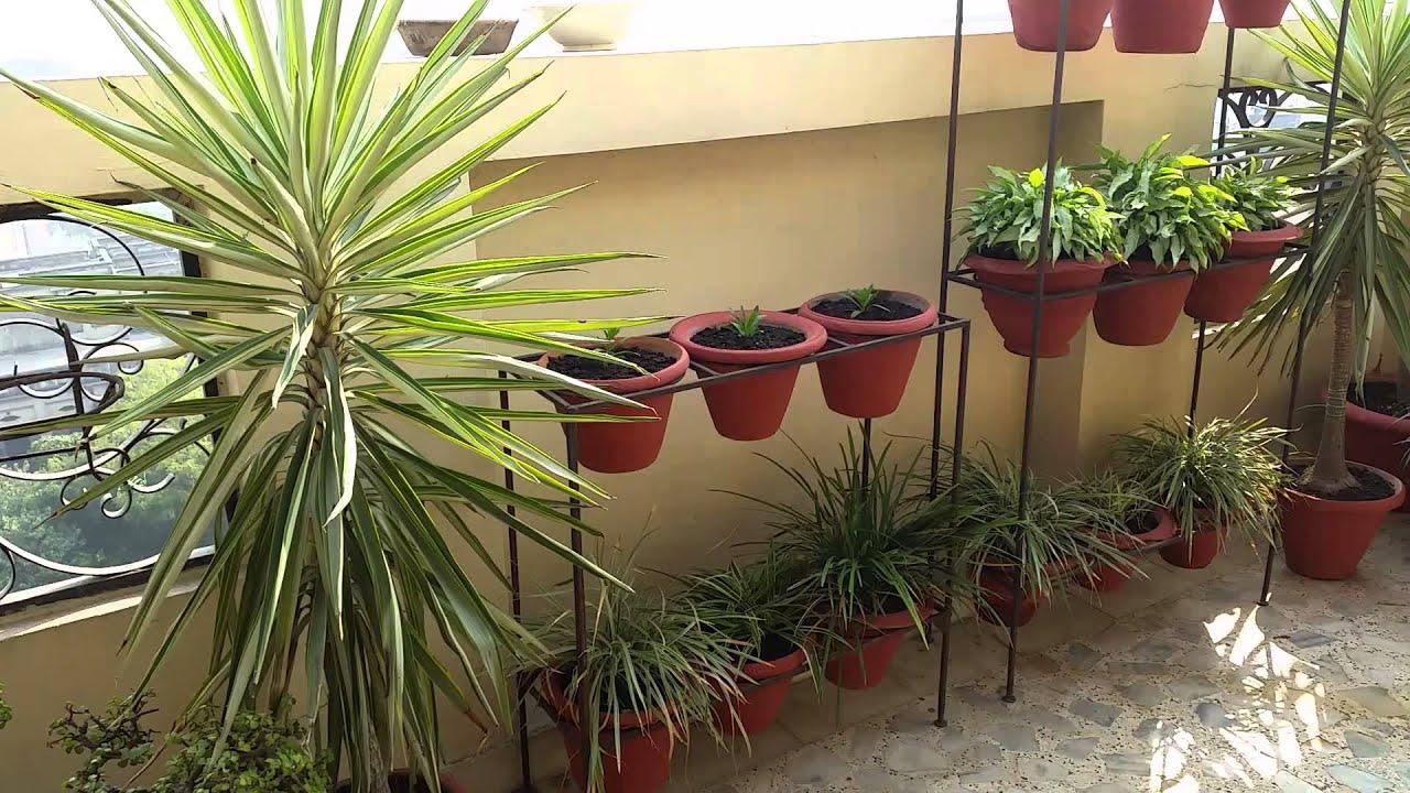 My Terrace Garden - YouTube