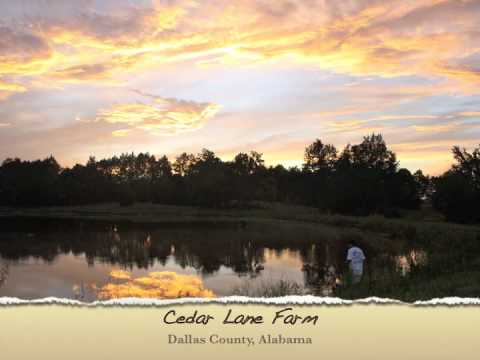 Alabama Land For Sale - Cedar Lane Farm, 155 Acres, Dallas County