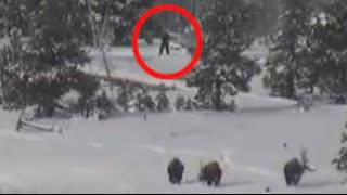 Bigfoot Family Caught on Tape!?