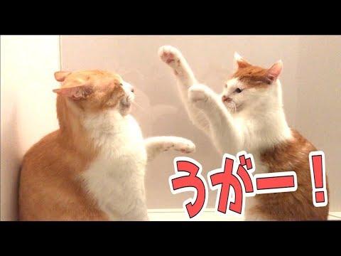 お風呂場で喧嘩する猫たちが可愛すぎるwww