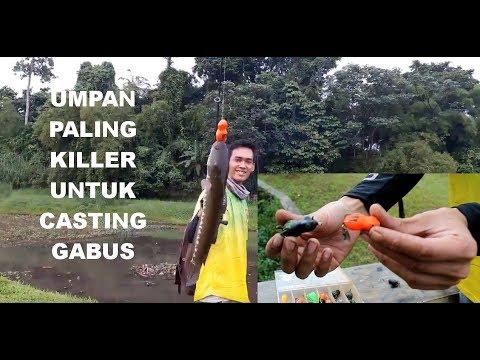 Mancing Gabus di Taman Perkemahan Jakarta Selatan (Snakehead Fishing Indonesia)