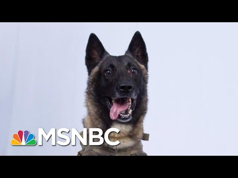 In This Political Climate, We Can Still Agree That The Dog Is Awesome, Right?   Deadline   MSNBC