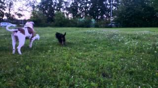 Собаки-Кусаки (2 часть)