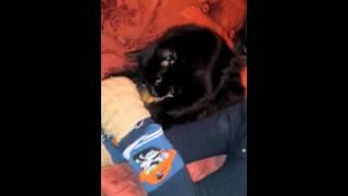 Как кошки лютят друг друга и жалеют друг друга