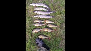 3-й день рыбалки. рыбалка на озере на поппер и воблер.