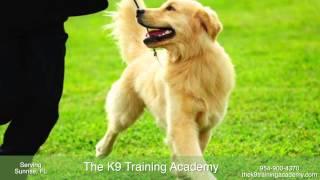 The K9 Training Academy - Dog Training In Sunrise, Fl