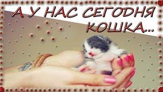 А У НАС СЕГОДНЯ КОШКА!!!/ДЕТСКИЙ КАНАЛ/AND TODAY WE HAVE A CAT!!!/CHILDREN'S CHANNEL