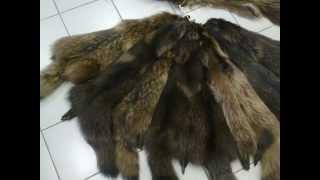 Шкуры енотовидной собаки крашенные(, 2012-08-24T10:52:04.000Z)