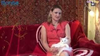 Cats&DogsTV - УДИВИТЕЛЬНЫЙ МИР КОШЕК - ТУРЕЦКАЯ АНГОРА / TURKISH ANGORA
