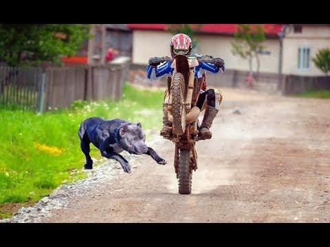 ANIMALS vs BIKERS – (ANIMALS ATTACKS MOTORCYCLIST) Vicious Big Dogs, Birds, Kangaroo hits! [Ep #04]