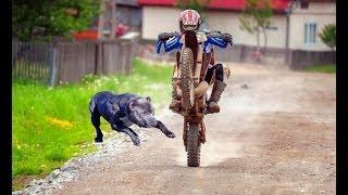 ANIMALS vs BIKERS - (ANIMALS ATTACKS MOTORCYCLIST) Vicious Big Dogs, Birds, Kangaroo hits! [Ep #04]