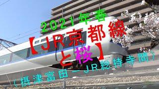 2021年春 【JR京都線と桜(摂津富田-JR総持寺間)】