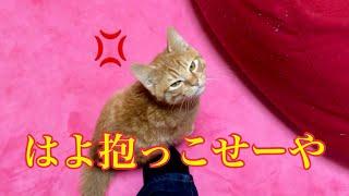 帰ってきた飼い主に抱っこを要求してくる子猫!Hug and I want you to cat
