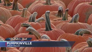 Buffalo's Best Pumpkin Patch: Pumpkinville