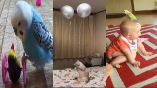 Try Not to Laugh Challenge - Funny Baby, Bird, Cat and Dog Fails Compilation Part 13. Funny Vines