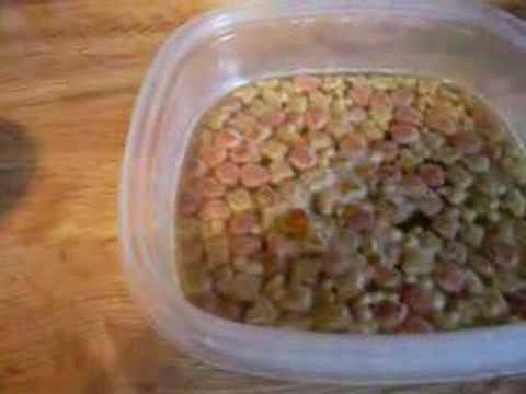How To Make Home-Made Baby Bird Food - YouTube