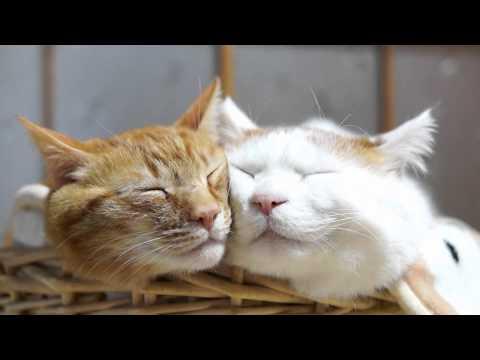 しろととら Good friend cat 2015#7