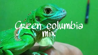 UNBOXING GREEN IGUANA COLUMBIA MIX | Animals lovers