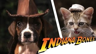 Indiana Bones - Raiders of the Lost Bark