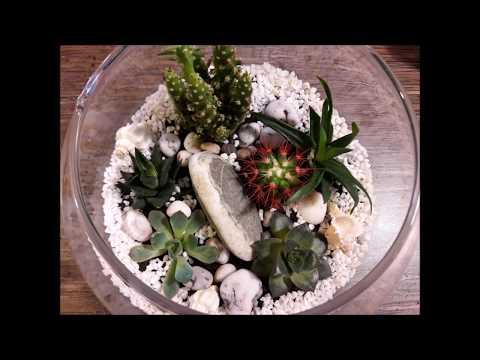 Флорариум дома #кактусы и #суккуленты/cactus succulent #decor